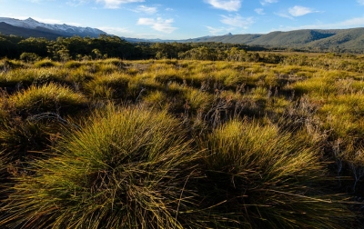 Buttongrass plain, Franklin-Gordon Wild Rivers National Park. Photo: Grant Dixon.