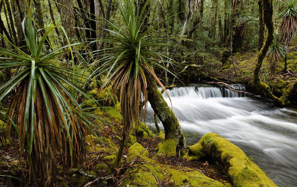 Highland rainforest stream, Tasmanian Wilderness World Heritage Area. Photo: Grant Dixon.
