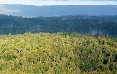 Wilderness rainforest in the Tarkine region. Photo: Grant Dixon